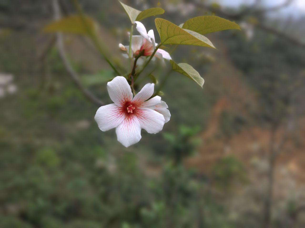 Hoa Trẩu - ảnh chụp bằng phone First Eyeem Photo
