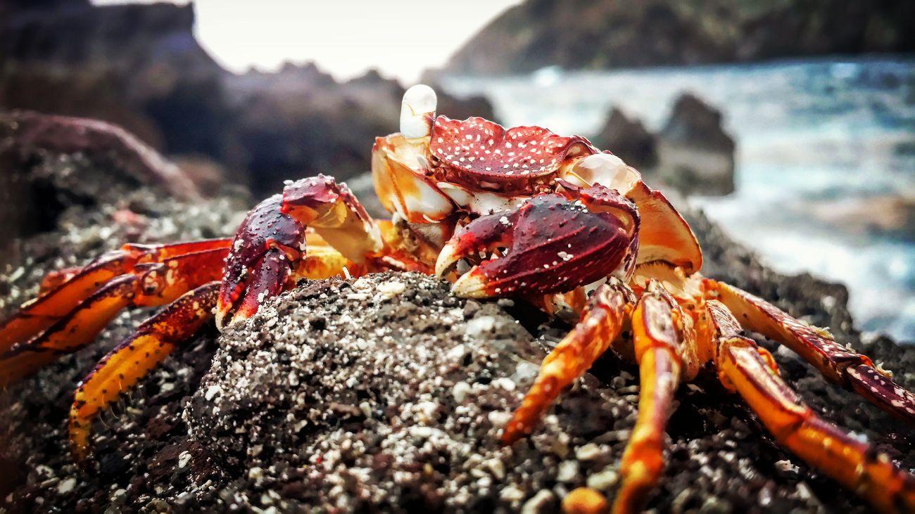 Just Crabbin' Around