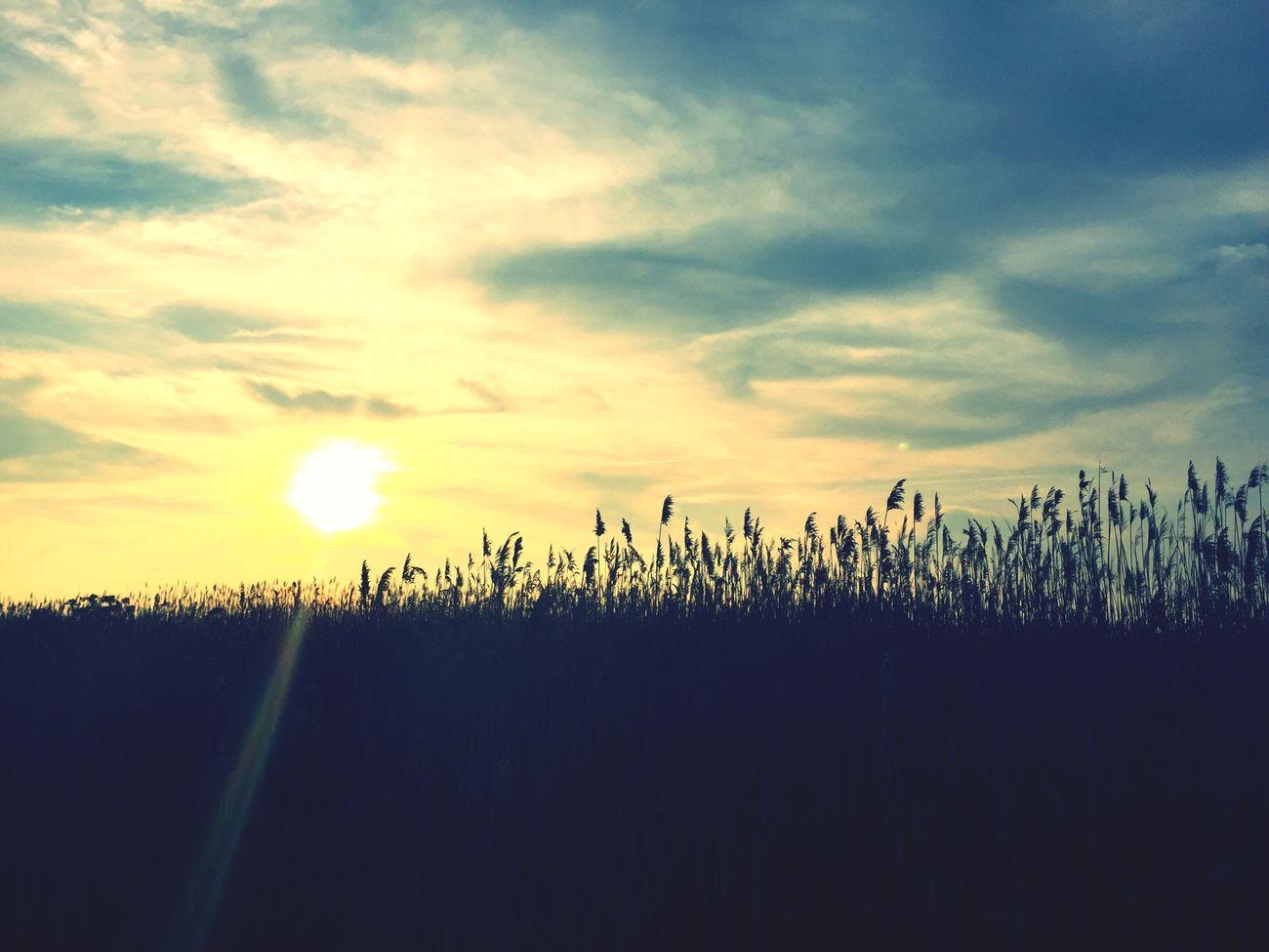 My NJ Grass Sunset Flies