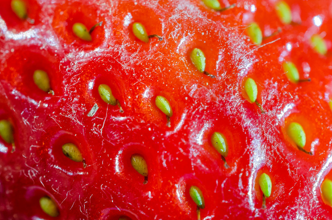 Backgrounds Berry Fruit Close Up Close-up Extreme Close-up Fly Agaric Mushroom Food Food And Drink Freshness Fruit Healthy Eating Macro Photography Mushroom Nature Pattern Red Slimy Strawberry Strawberry Surface Vibrant Color