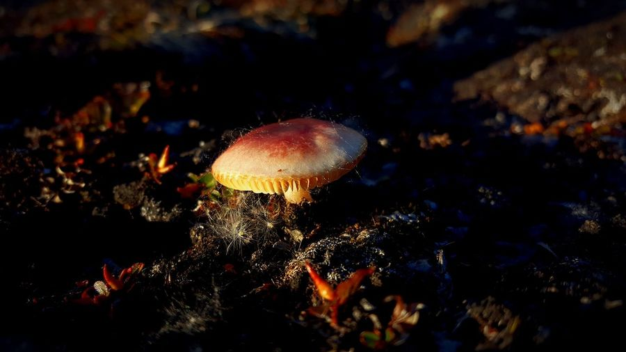 Close-up No People Outdoors Nature Day Summer Innaarsuit Greenland Mushrooms 🍄🍄 Mushrooms Eyeem Photography Is My Escape From Reality! Nature Photography