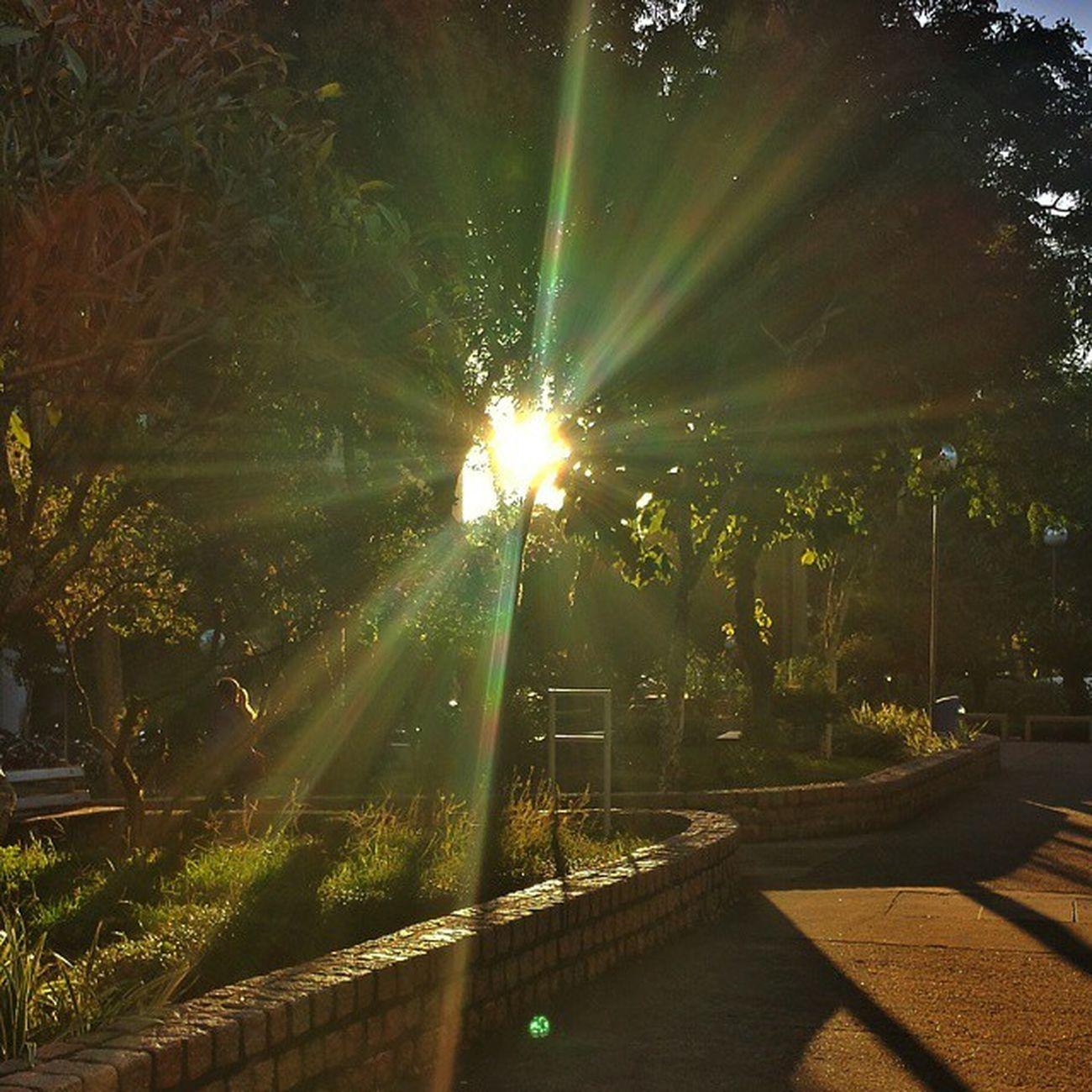 Boom Diiaa/Good Morning... Sun Thursday Sunrise Tree Bomdia Goodmorning Goodday Mundo_fotografico Photografy Photo Photooftheday Vibe Pucrs Instalike Instapoa Instalive Instaphoto Igerspoa Igersoftheday Lightning