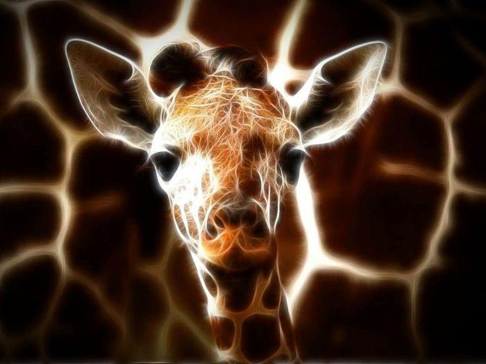Giraffe Babygiraffe Fractalius Hi! Hello World Not My Pic Fractaliart