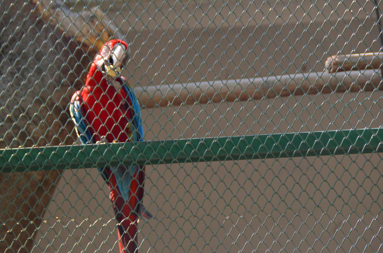 BannerghattaNationalPark Cagedbirds Macaw Parrot Macaw, Bird Macaws Parrot Seekfreedom Zoo Zoophotography