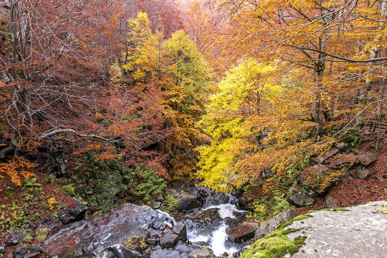 Dardagna falls, first section from top Appennini Appenninotoscoemiliano Autumn Autumn Colors Beauty In Nature Cascate Del Dardagna Colors Dardagna Dardagna Fall Italy Multi Colored Nature Nature Nature Beauty No People Stream Waterfall Waterfalls