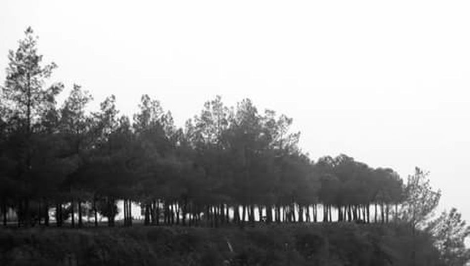 AdanaTurkey Trees Black And White Turkuaz