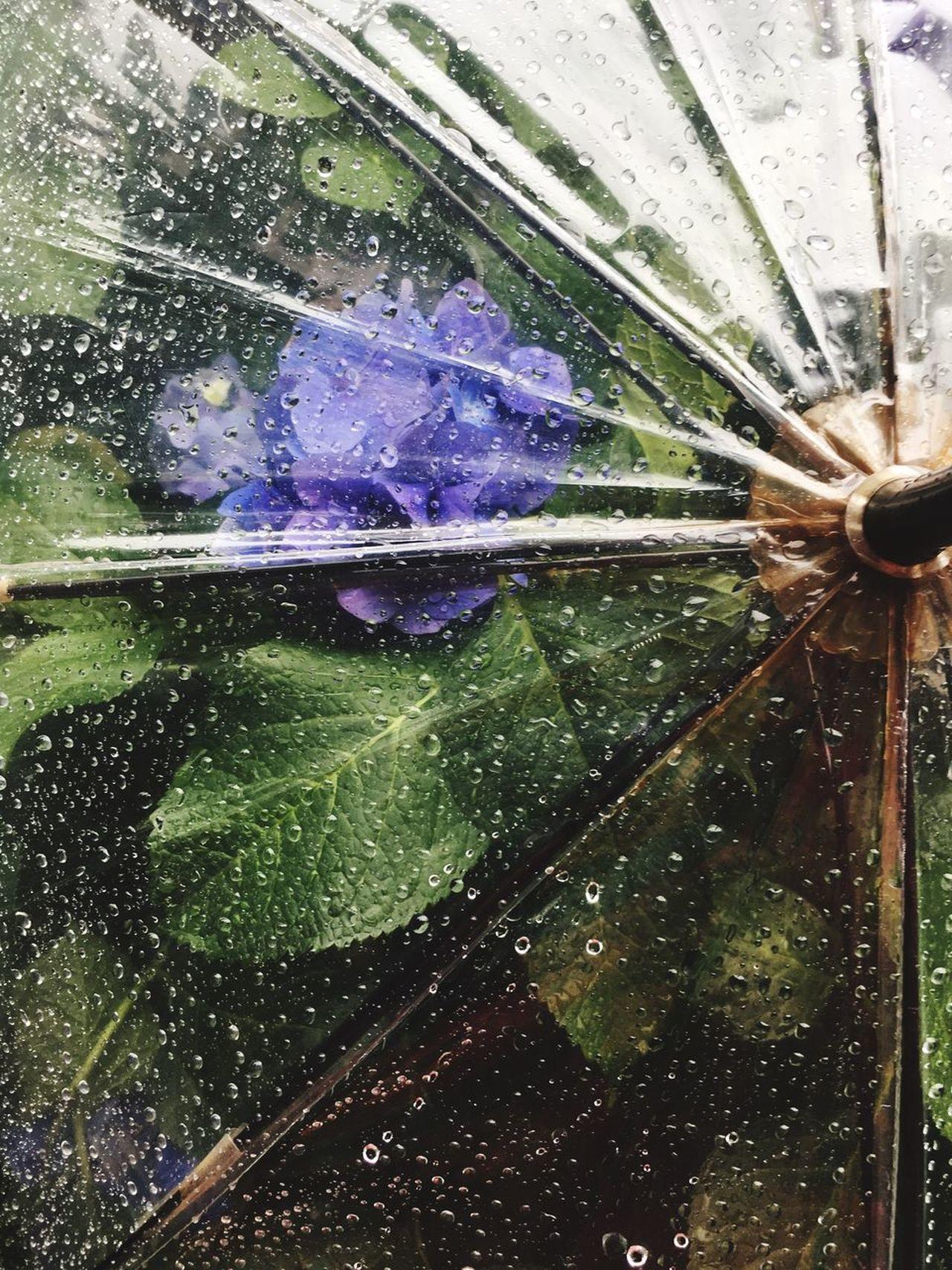 Rain Water Drop Wet Flower Drops Umbrella Purple Hydrangea