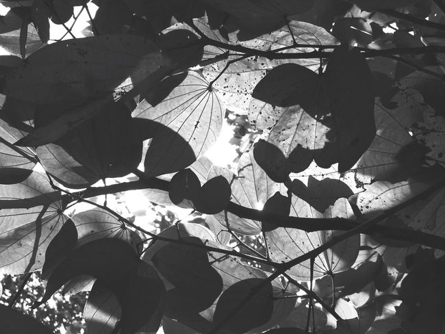 Monochrome Photography EyeEm Best Shots Outdoors Nature Plant