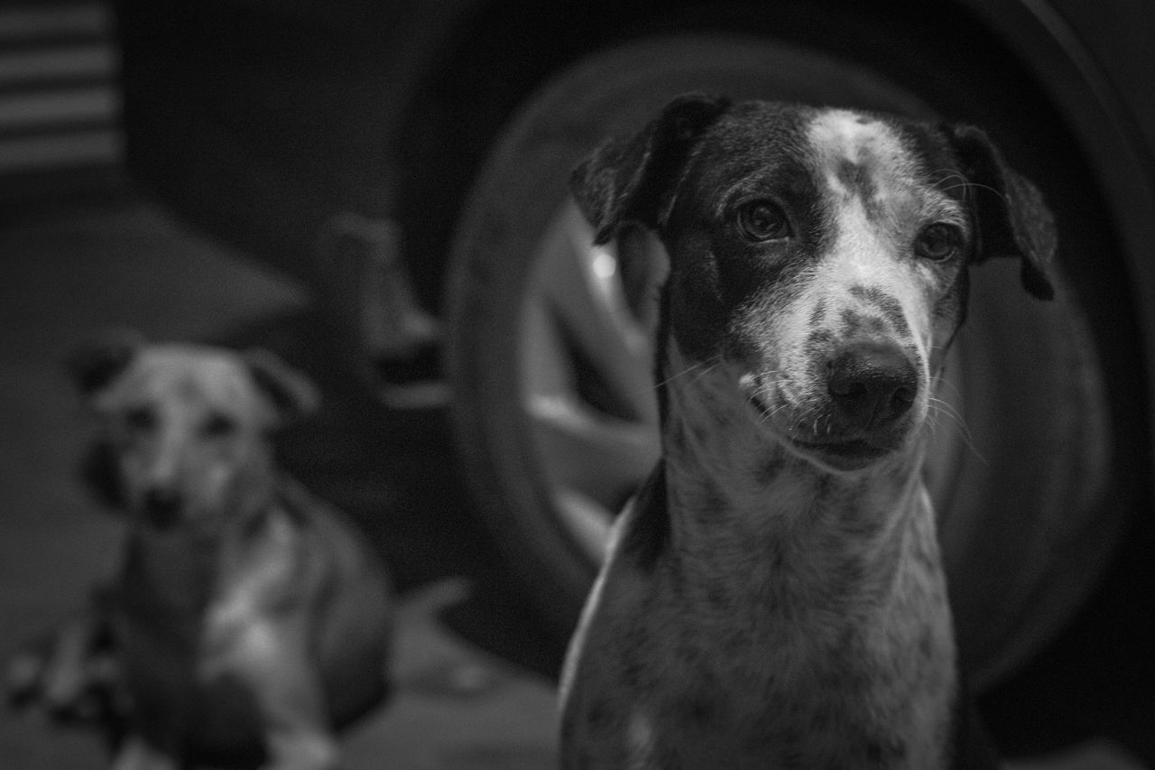 Animal Themes Close-up Day Dog Domestic Animals Focus On Foreground Home Interior Indoors  Live For The Story Looking At Camera Mammal No People One Animal Pets Portrait Potrait The Week On EyeEm