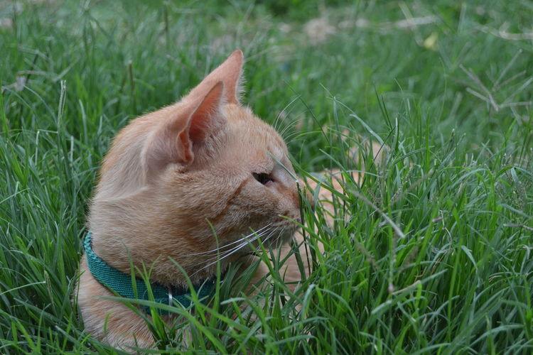 Kitty Animal Themes Cat Feline Nature No People One Animal Pets