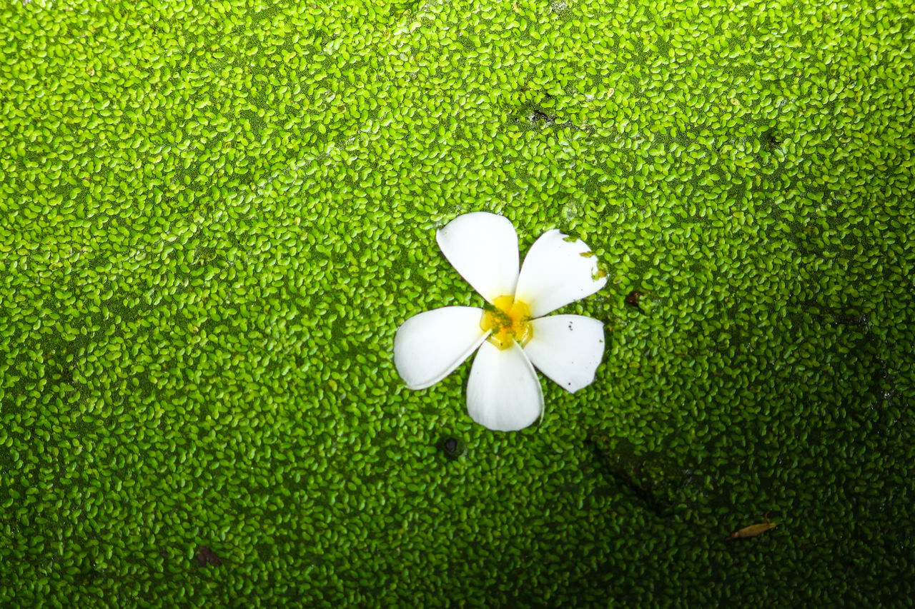 Macro Marshland  Marsh Green Green Leaf Jasmine Flower Beauty In Nature Grass Green Color White Color White Flower Nature Flower Head Flower Minimalism Light And Shadow Background Texture Background Close-up Pattern, Texture, Shape And Form Full Frame