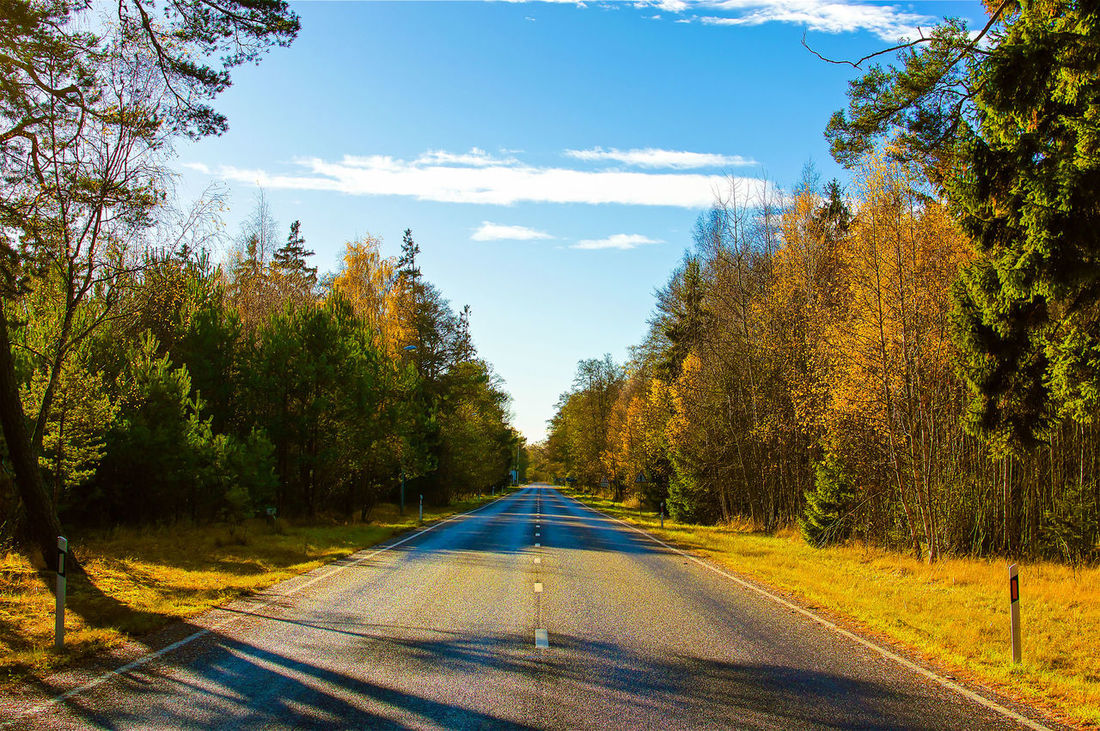 Autumn Autumn Colors Autumn Leaves Country Road Green Landscape Nida Outdoors Road Sky The Way Forward Tree