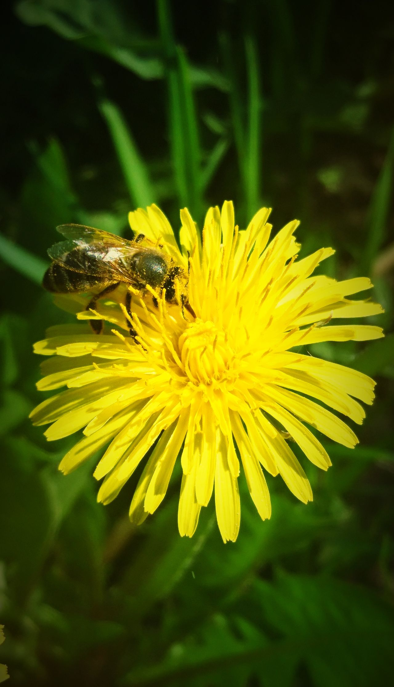 Flower Yellow Nature One Animal Beauty In Nature Outdoors Animal Themes Focus On Foreground Bee 🐝
