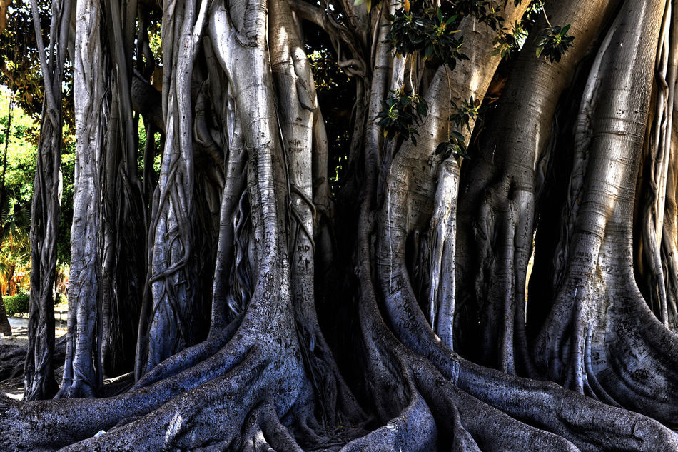 Beautiful stock photos of plant, Bark, Close-Up, Day, Detail