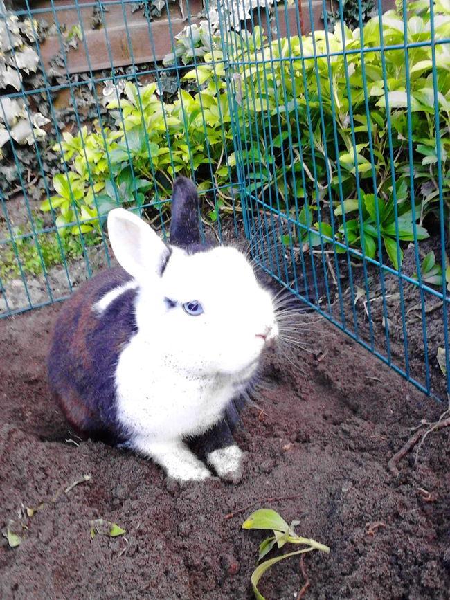 EyeEm Animal Lover, My Rabbit, Mr Rabbit, Rabbit