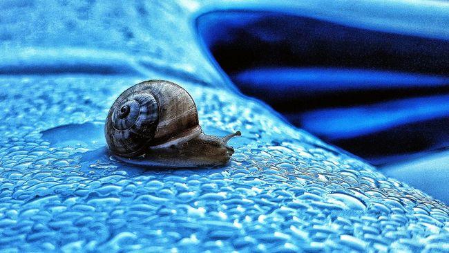 Snailstagram Snails🐌 Snail Collection Snail🐌 Snails Snail Snail ❤ Caracoles  Caracol Caracol De Jardin Caracoleando Animals Animal Animal Photography Animal_collection Animales En Libertad Animalphotography Blue Blue Color Azul Azules Azul♥ Azul Y Blanco AzulYBlanco Colur Of Life.