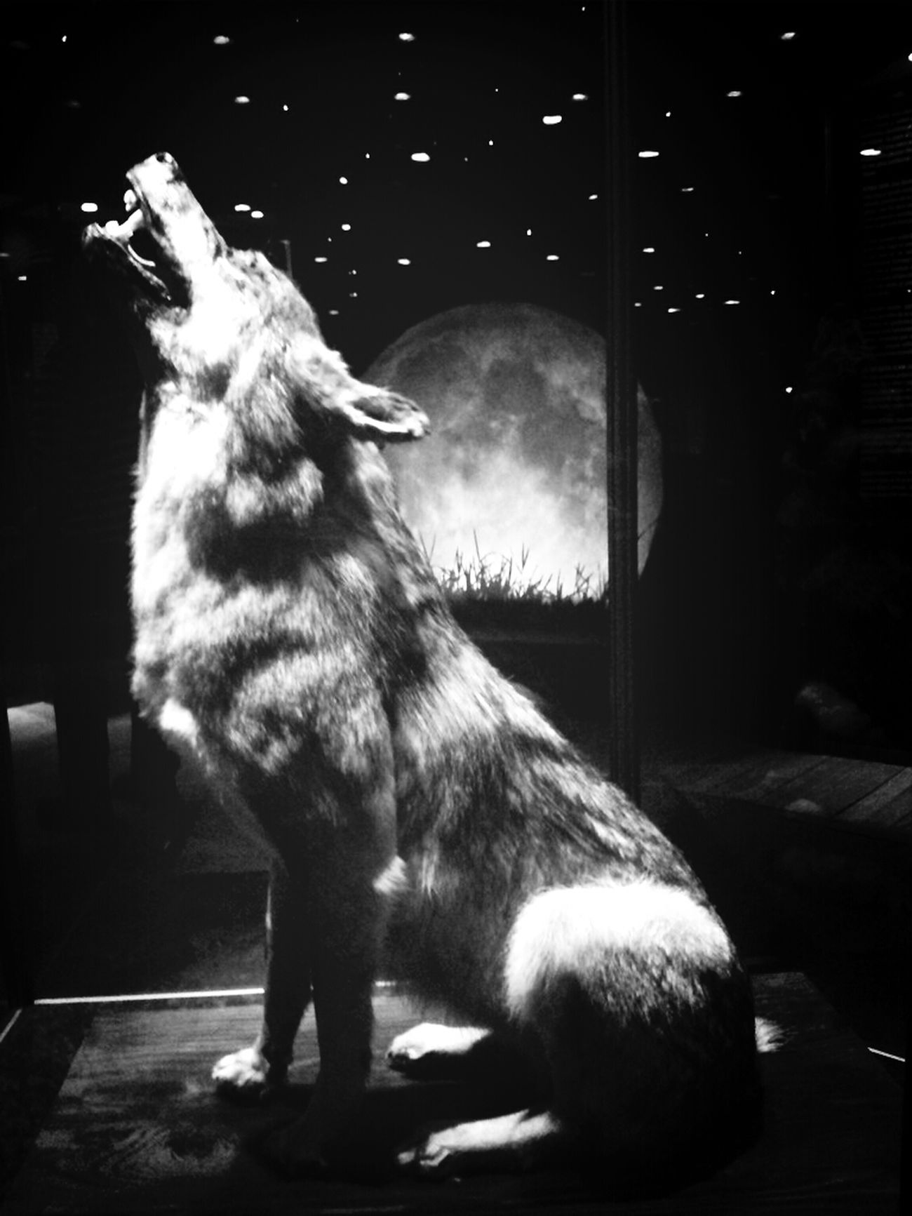 Creatures Of The Night Wolf Full Moon Black And White
