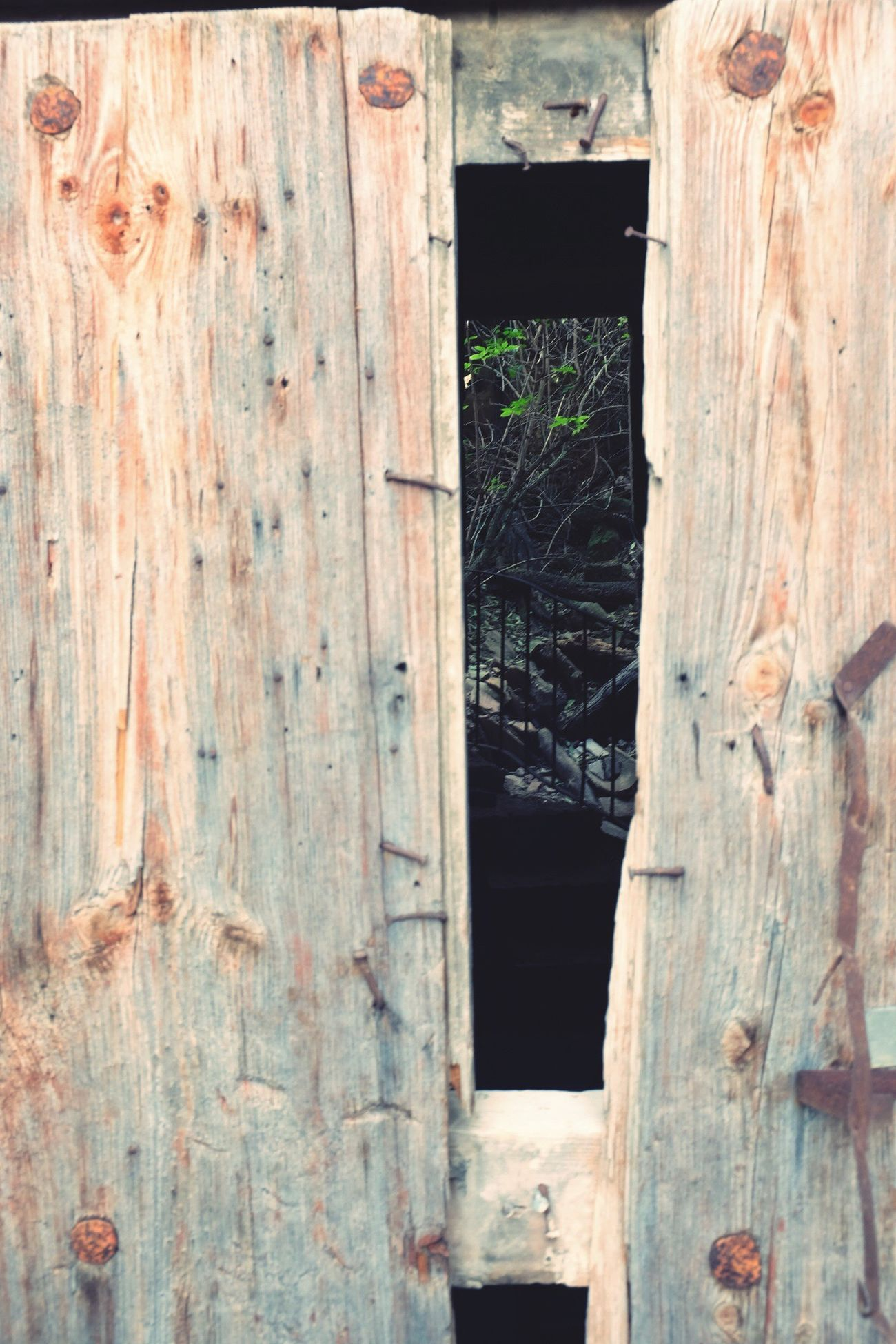 Wood - Material Architecture Tranquility Mountain EyeEm Built Structure Door Outdoors No People Plant Day Close-up