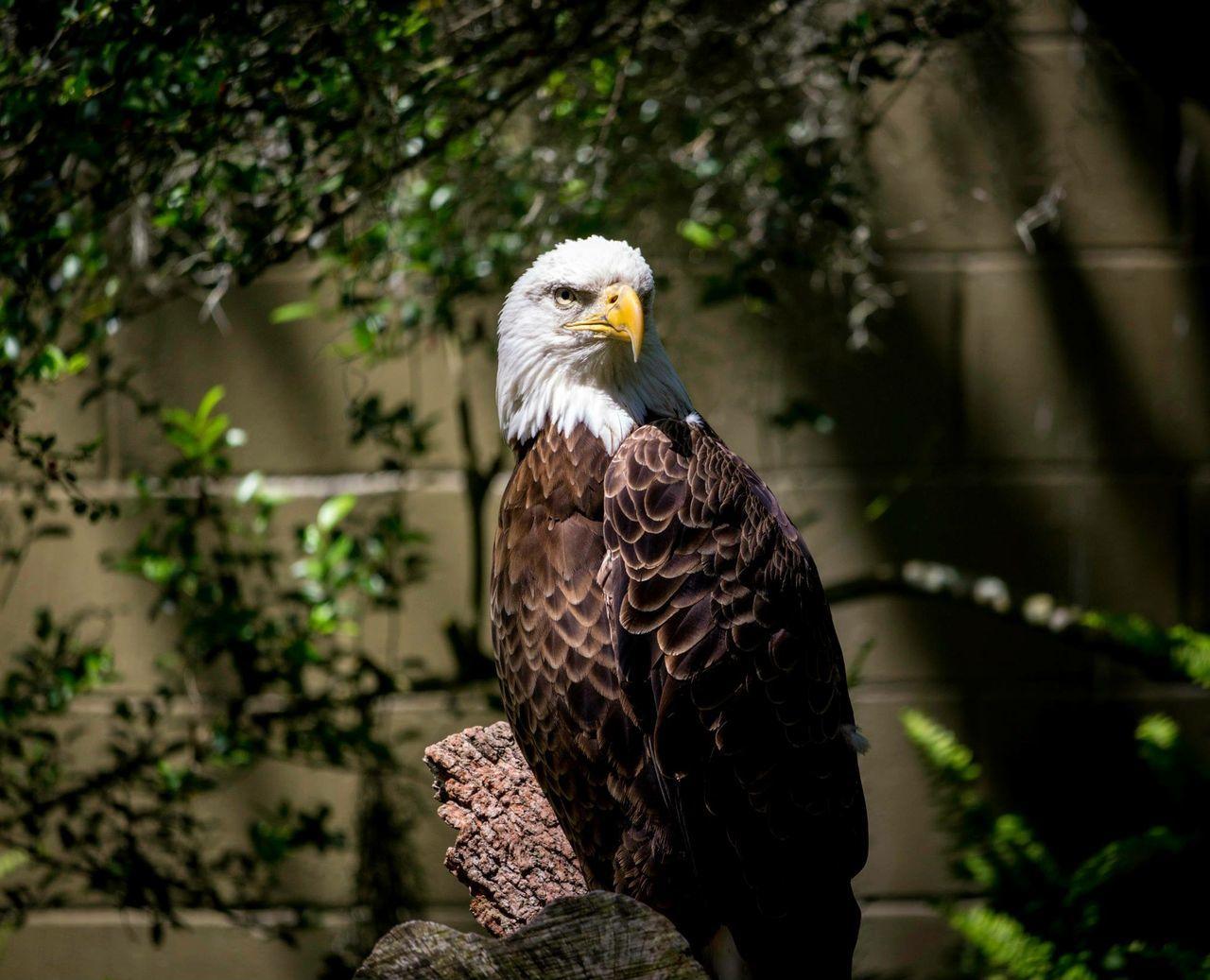 Beautiful stock photos of eagle, Animal Head, Animal Themes, Animals In The Wild, Beak