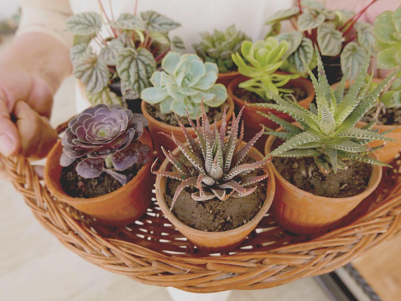 winter gardening Succulents Cactus Gardening My Little Garden Grow Urban Gardening Winter Garden Leica D-lux Typ109