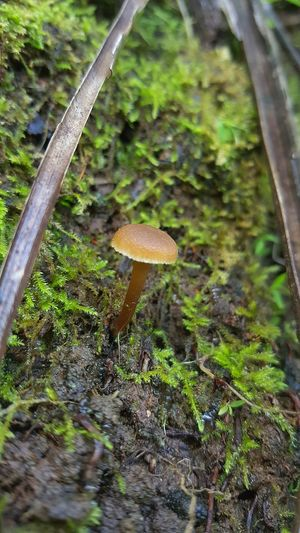 Mushroom Outdoors Toadstool Close-up Fragility Beauty In Nature Growth Wild Things Grow