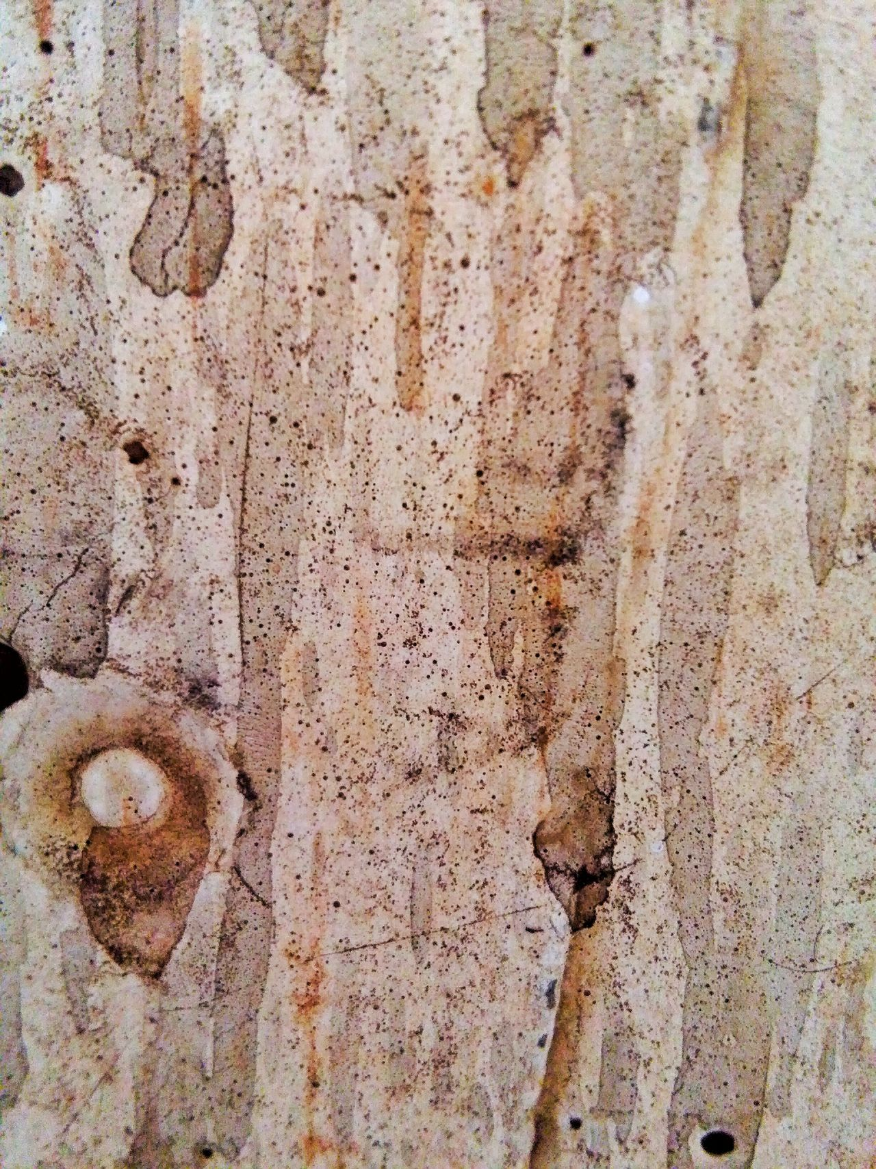Texture Textures And Surfaces Rusty Wall Dirty Dirty Wall Schmutzig Wand Mauer Braun Braunton Dreck Dreckig Wand Textur Mapping Skin Fleckig Flecken Beton Concrete