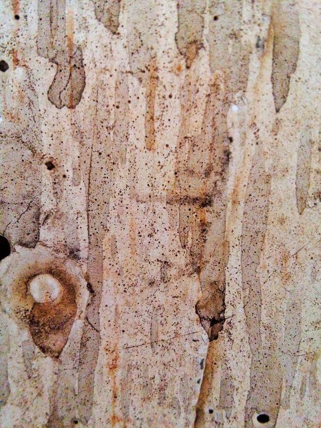 Texture Textures And Surfaces Rusty Wall Dirty Dirty Wall Schmutzig Wand Mauer Braun Braunton Dreck Dreckig Wand Textur Mapping Skin Fleckig Flecken Beton Concrete