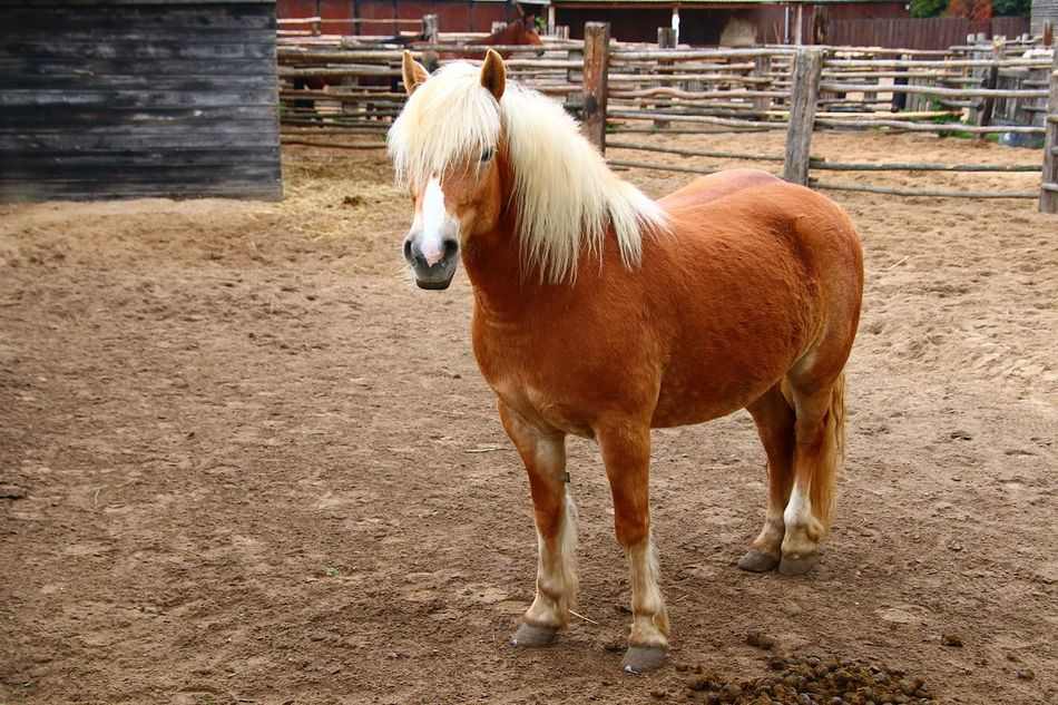 Beautiful stock photos of pony, Animal Hair, Animal Pen, Animal Themes, Day