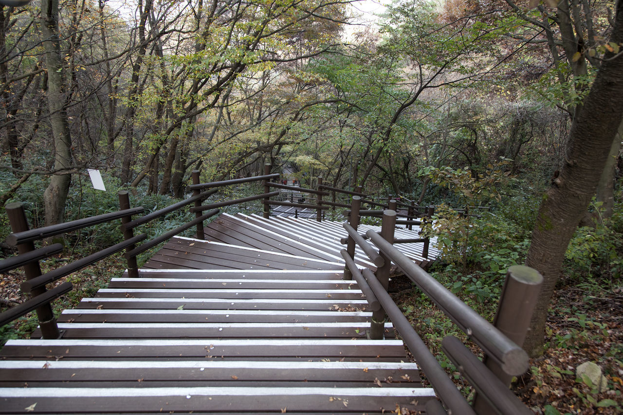 autumn in Maisan Mountain, Muan, Jeonbuk, South Korea Autumn🍁🍁🍁 Beauty In Nature Branch Day Fall Footbridge Forest Growth Hand Rail Maisan Mountain Nature No People Outdoors Railing Staircase Stairway Steps Steps And Staircases The Way Forward Tranquility Tranquility Tree