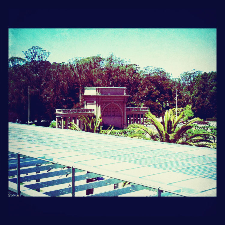 rooftops at Golden Gate Park, San Francisco by Koduckgirl