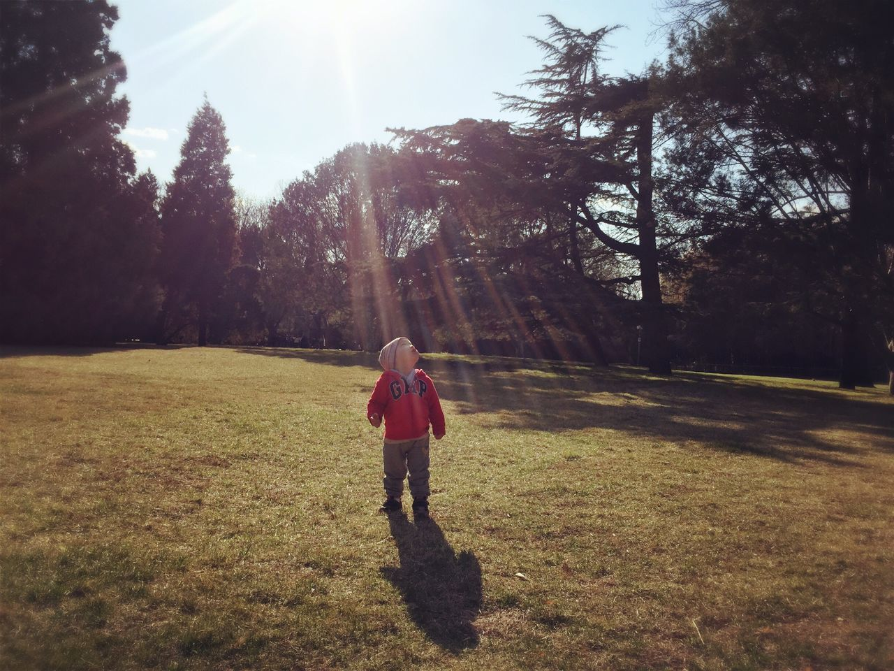 tree, sunlight, real people, one person, grass, leisure activity, casual clothing, outdoors, full length, day, nature, childhood, shadow, sky, lifestyles, growth, young adult, people