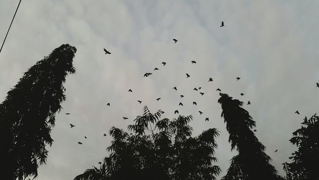 A Murder of Crows Hello World Taking Photos Check This Out First Eyeem Photo