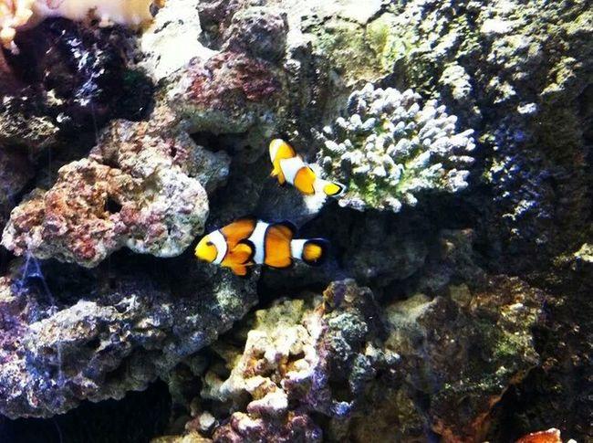 Found Nemo and his bro/sis