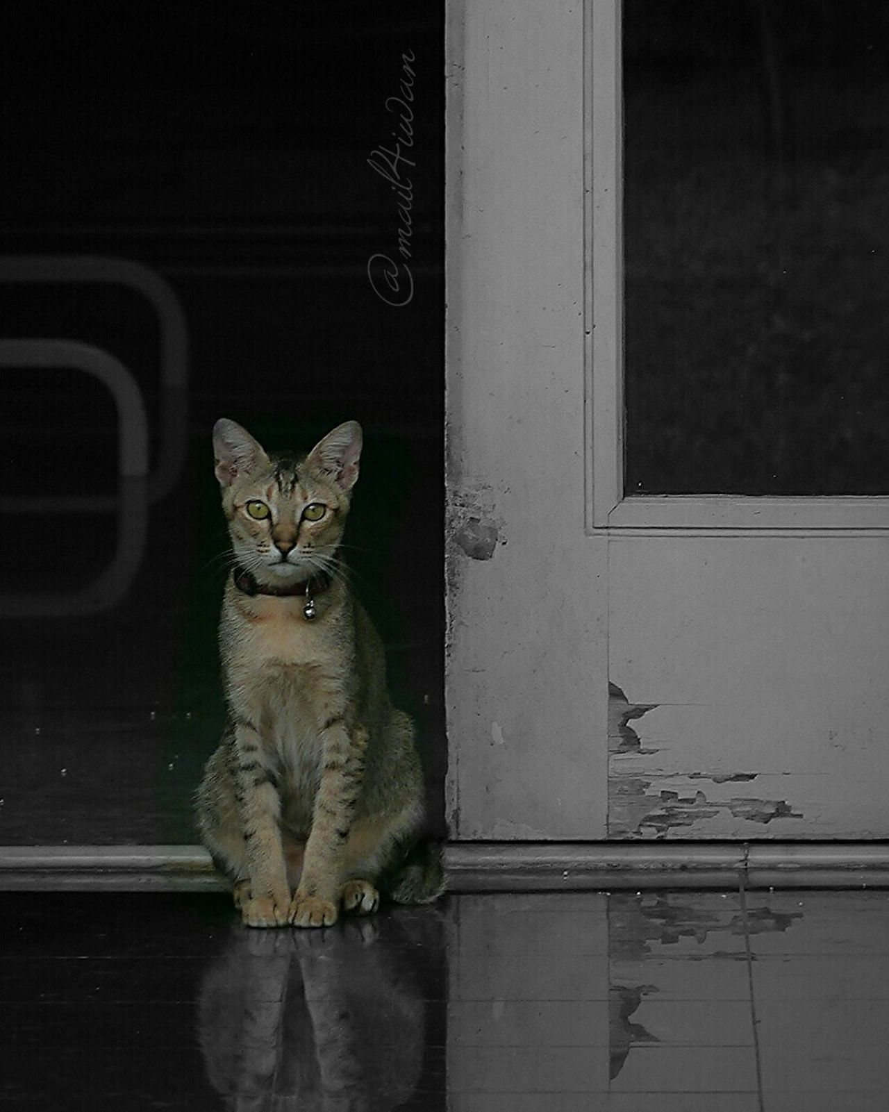Domestic Cat Pets Feline Portrait Domestic Animals Looking At Camera Indoors  Sitting No People Mammal Animal Themes Day Color Splash