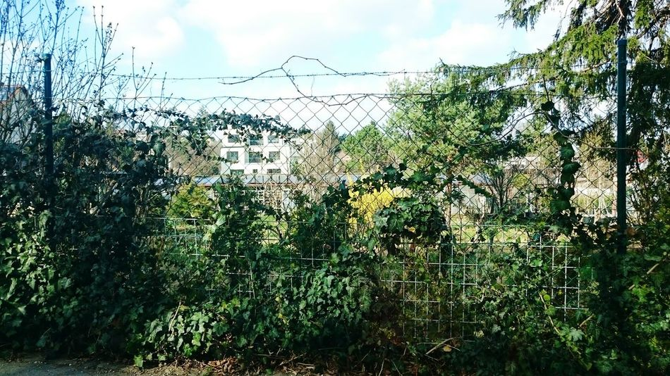 Baum, Landschaft, Weite Tree_collection  Baum Trees And Sky Zaun Zaunschönheit Strauch Sträucher Fence Fences Fences & Beyond Fencing Fenceporn Fence Club Fence Art Fenceline