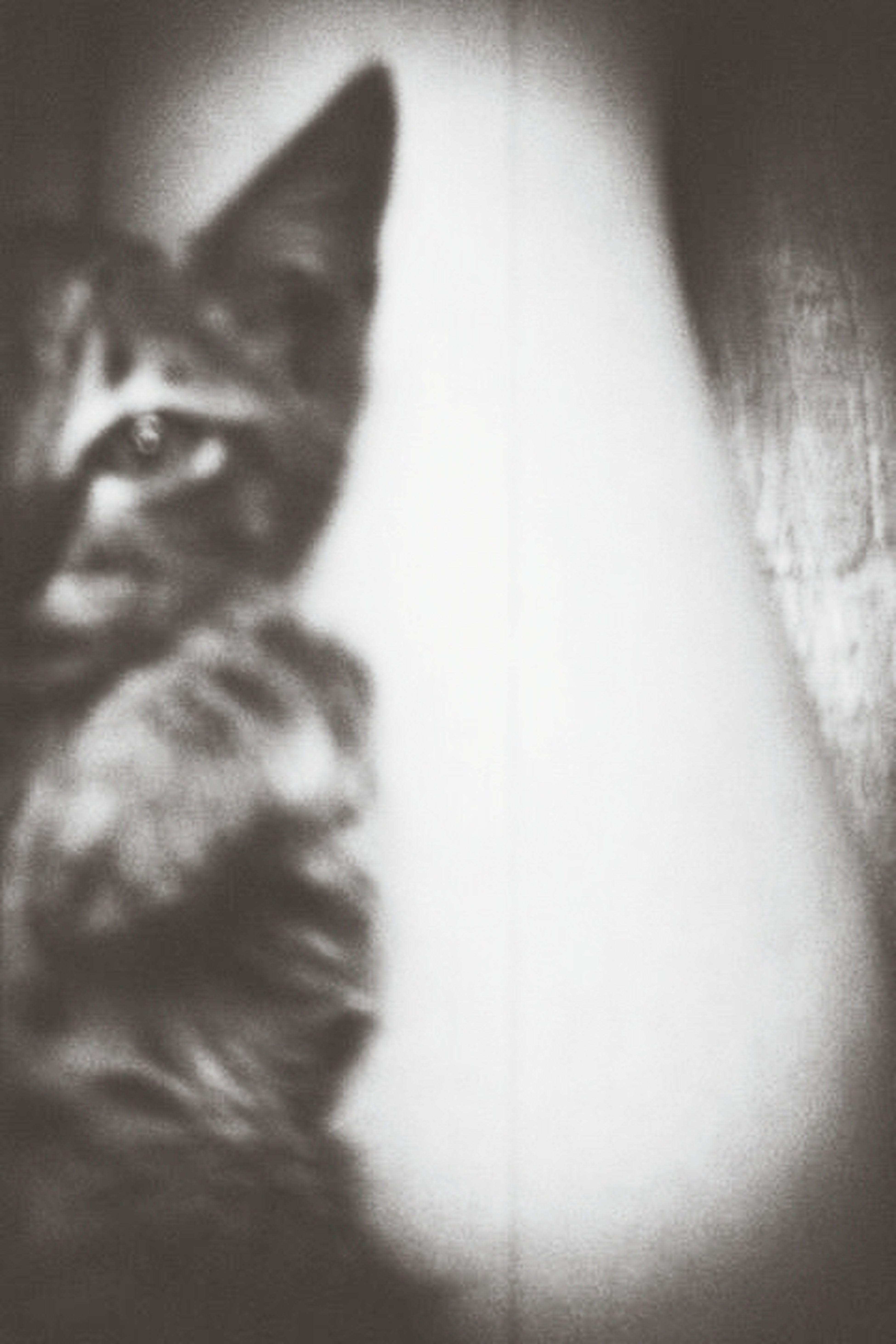 Kyung chul's youth Vintageperfection Hipstacats Eyeemcats Holga135bc