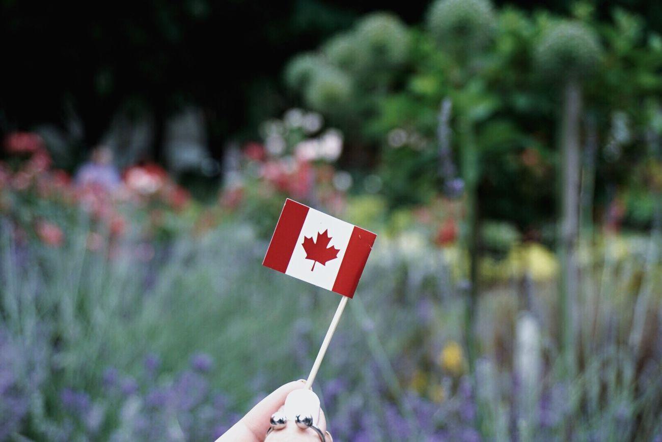 Canada Canada Day Toronto Torontophotographer Photo Photography Lifestyles Photooftheday