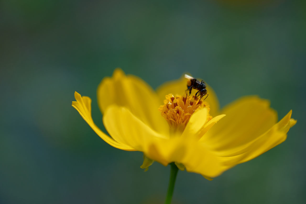 Animal Themes Animal Wildlife Animals In The Wild Beauty In Nature Bee Close-up Day Flower Flower Head Fragility Freshness Growth Insect Nature No People One Animal Outdoors Petal Plant Pollen Pollination Springtime Symbiotic Relationship Yellow