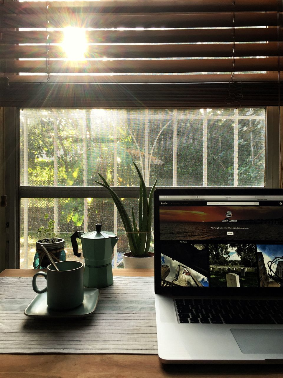 window, indoors, sunlight, no people, day, greenhouse, nature, tree