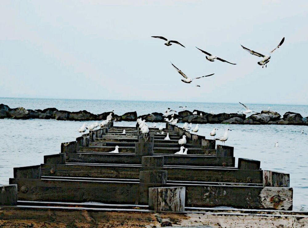 Old Pier Bird In Flight Sand & Sea Creative Shots Nature Photography Beach Photography Seaweed, Bay, River, Shore, Coast, Rocky, Beach Birdsinflight Flock Of Gulls Ocean View