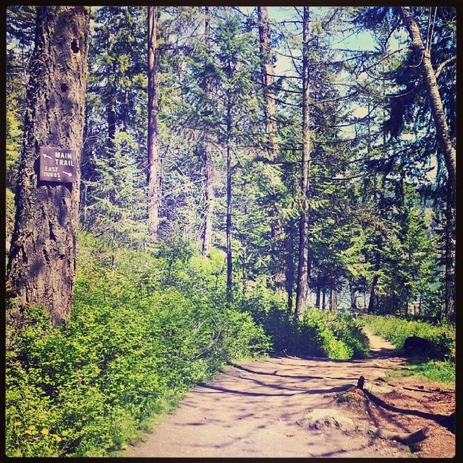 Trailrunning run in the sun TubbsHill