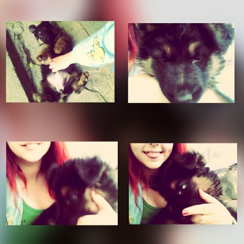 My Puppy ❤ My Lovely Dog Spring2015 Happy Happiness ♡ Djo Relaxing Taking Photos Hi! Enjoying Life
