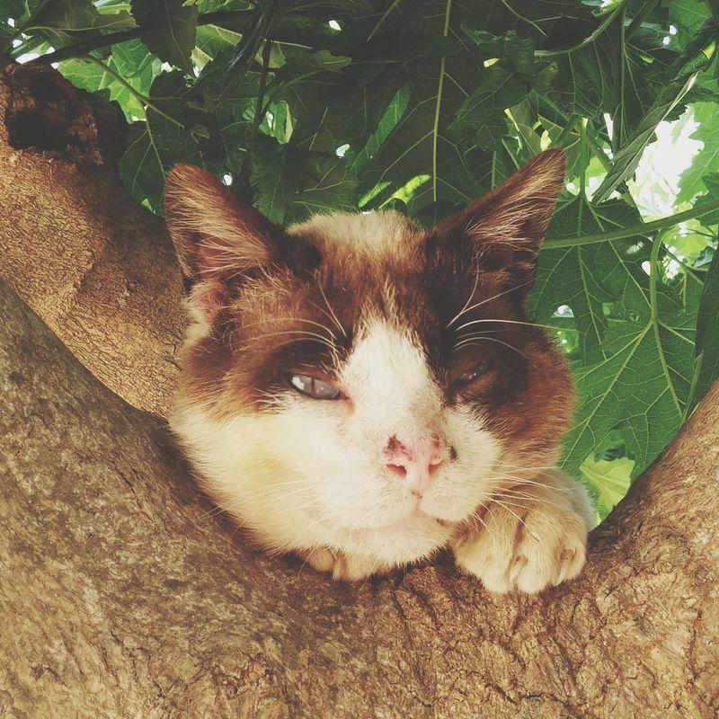 Gato One Animal Feline Domestic Animals Domestic Cat Gat Adoptado Precioso Viejito Photography Fotografia