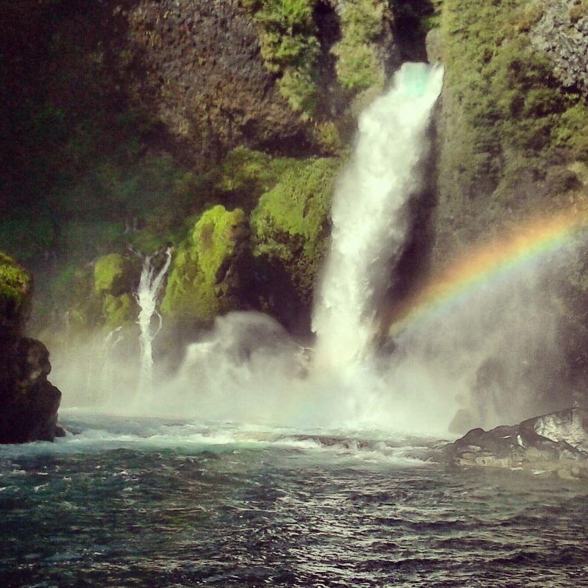 aqui existen mas colores que el verde Things That Are Green Chile Lindo Reserva Natural Huilo-huilo EyeEmBestPics