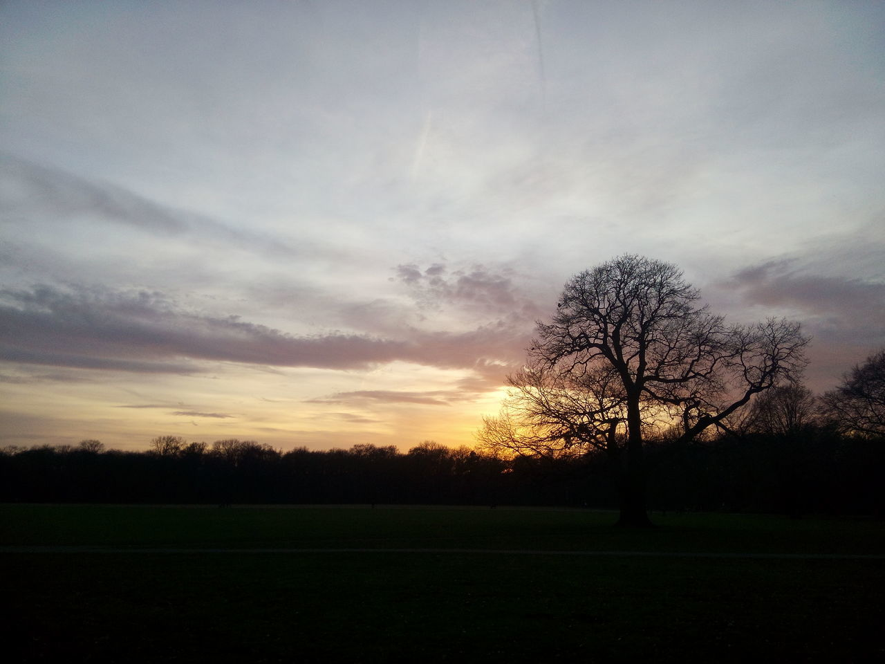 sunset, tree, sky, nature, beauty in nature, cloud - sky, field, idyllic, tranquility, silhouette, growth, tranquil scene, no people, outdoors, day
