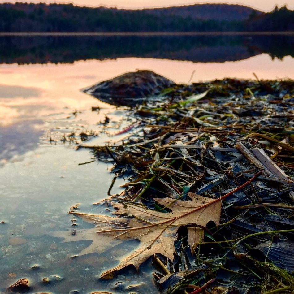 """I went out for a walk and finally concluded to stay out till sundown, for going out, I found, was really going in."" ~John Muir Nature Fall Lake Leaf Water No People Tranquility Outdoors Close-up Contemplativephotography Breathe Beauty In Nature Noticedwhilewandering"