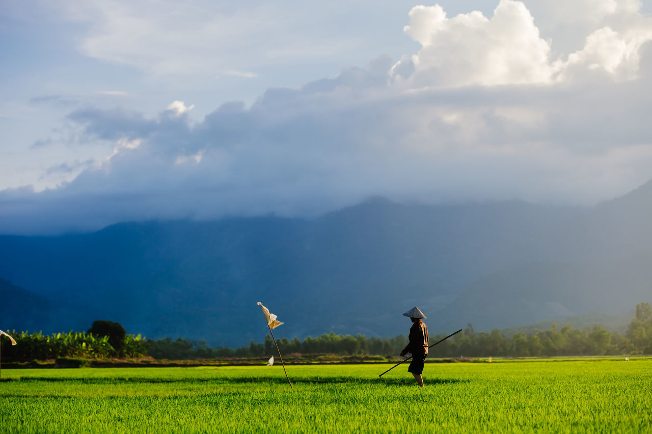 rice farmer on rice field in Vietnam, Asia. Farmer in non la harvesting rice field. Picturesque rice field. Agriculture Asian Culture Beauty In Nature Day EyeEm Best Shots EyeEm Nature Lover EyeEm Travel Photography Landscape Light Nature Nature Photography Non La Outdoors Picturesque Picturesque Scenery Rice Farmer Rice Field Rice Harvesting Sunlight Sunset Travel Destinations Travel Photography Vietnam