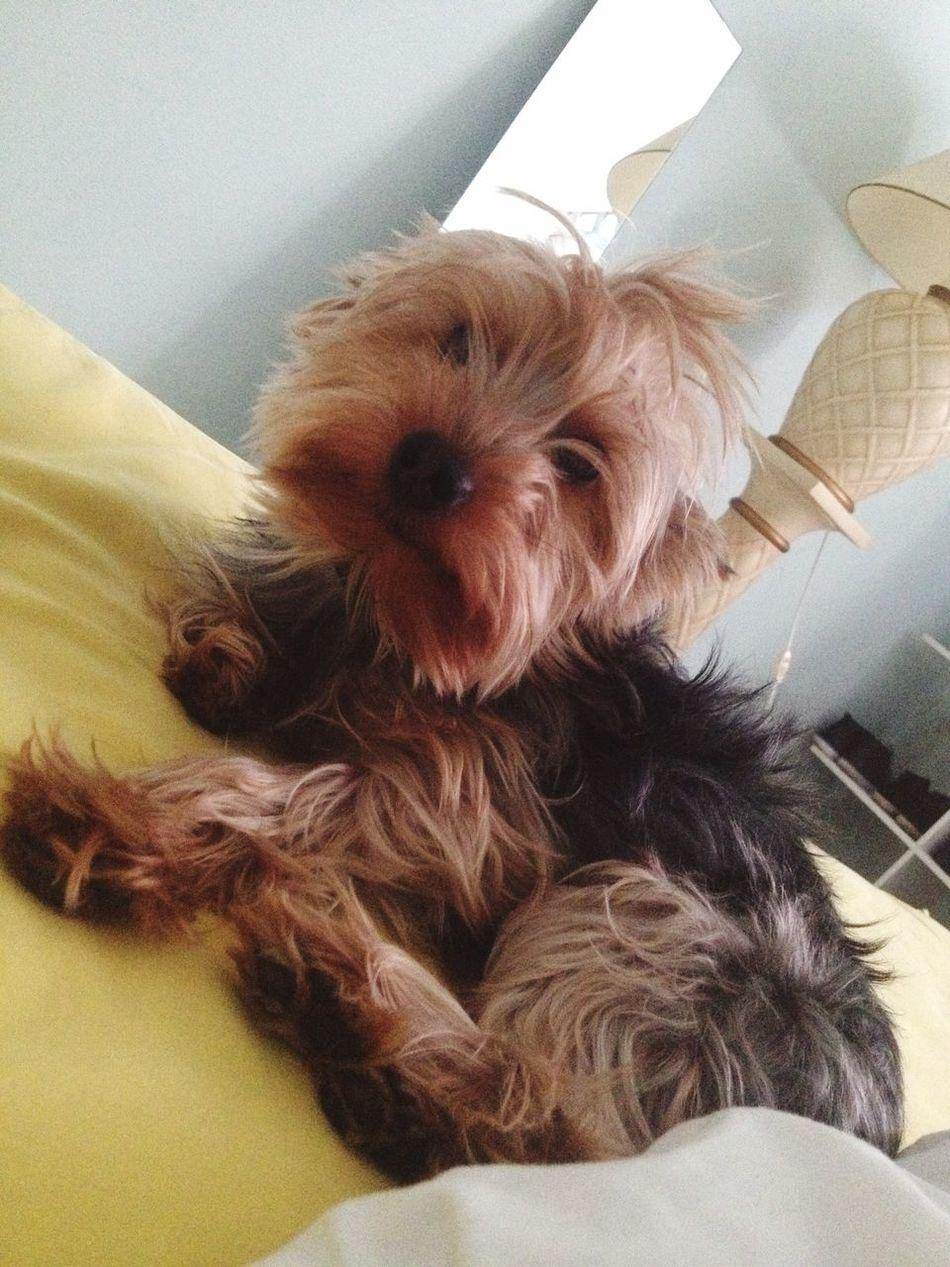Puppy Love CrazyHairDay