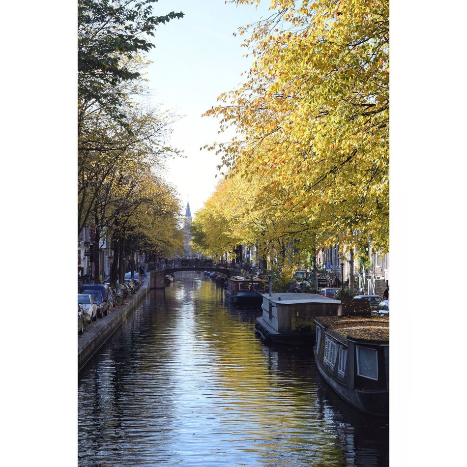 It's not a Van Gogh painting! Tree Canal Water City Transportation Nautical Vessel Architecture Building Exterior Outdoors No People Nature Sky Day Architecture Holanda Beauty In Nature Netherlands New Life Freshness Bicycle Vangogh Painting Photo City Famous Place