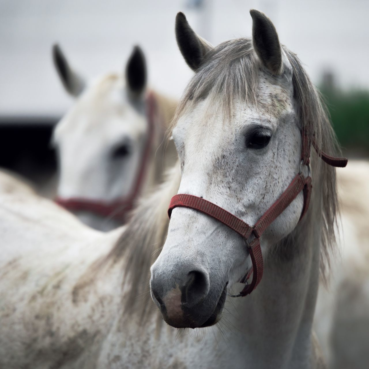 Animal Themes Close-up Day Domestic Animals Horse Mammal Nature No People One Animal Outdoors